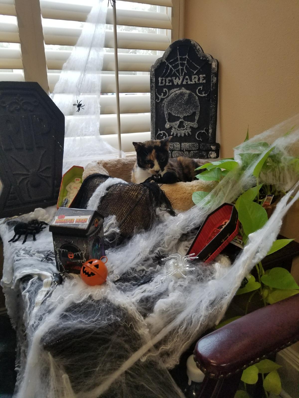 Halloween-chloe-Arkovich