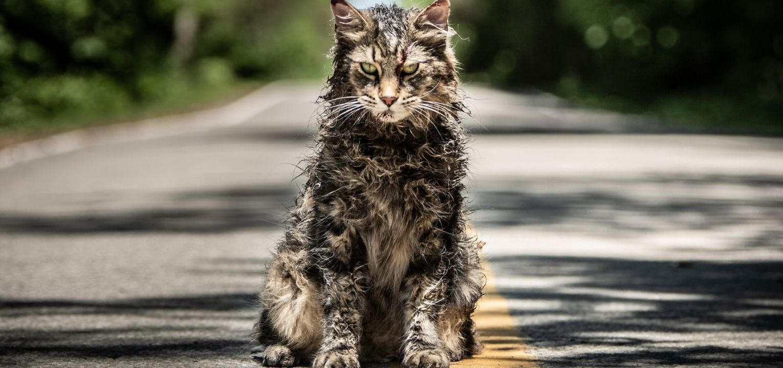 Ragged-cat